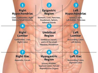 Illustration of Pain In The Middle Of The Stomach.?