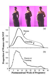 Illustration of Nausea, Vomiting Stops Before The First Trimester Is Over, Is It Dangerous?