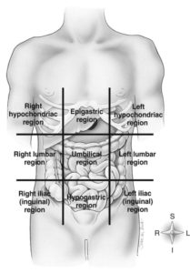Illustration of The Folds Between The Abdomen And Right Chest Like To Hurt?