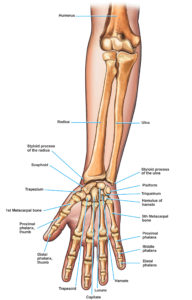 Illustration of Causes Of Pain In The Right Little Finger?