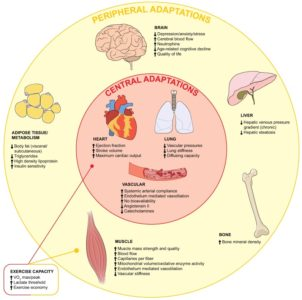 Illustration of Associated Disorders Of Liver Function With Decreased Endurance?