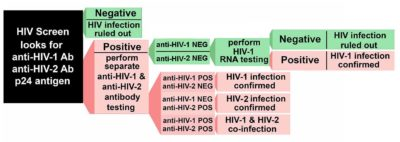 Illustration of The Meaning Of The HIV Antibody Test Results?