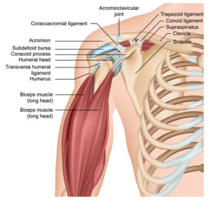 Illustration of Can Heavy Exercise With The Condition Of The Collarbone Use A Pen?
