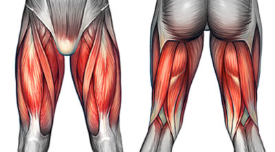 Illustration of Pain Around The Upper Thigh If Used For Kicking?