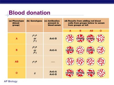 Illustration of Can Someone Who Has Blood Type A Get Blood With Blood Type B?