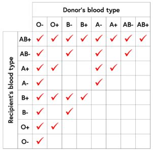 Illustration of Are Blood Types O And AB Not Allowed To Get Married?