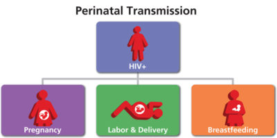 Illustration of How Is The Transmission Of HIV Disease?