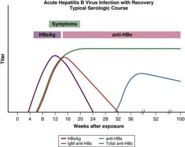 Illustration of Prevention And Recovery Time For Acute Hepatitis B?