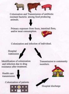 Illustration of The Rules Of Consumption Of Two Types Of Antibiotic Drugs Are Ear Infections?