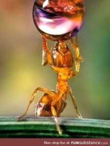 Illustration of The Cause Of Drinking Water Glasses Filled With Ants?
