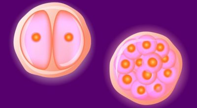 Illustration of Causes Of Small Egg Cells In Women?