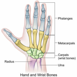 Illustration of Right Wrist Pain After The Accident?