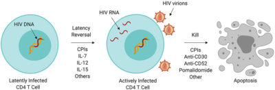 Illustration of It Is Possible That People With HIV Have Drastically Gained Weight?