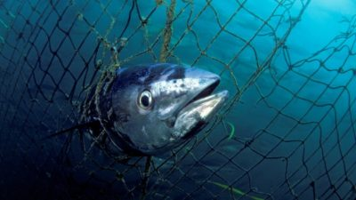 Illustration of Consumption Of Sea Fish When Suffering From Uterine And HIV Cancer?