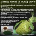 Benefits Of Soursop Leaf Boiled Water For Health?