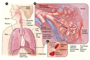 Illustration of It Is Possible That The TB Gland Has Re-grown And Spread To Make The Stomach Grow?