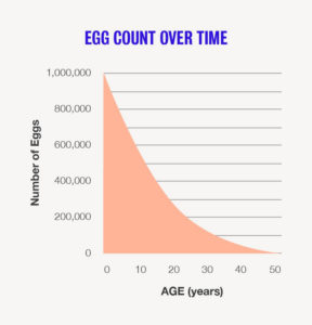 Illustration of Normal Number And Size Of Eggs In Women?