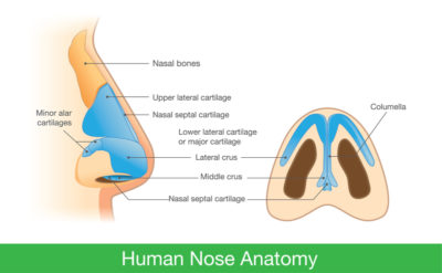 Illustration of Prolonged Nasal Congestion With Nosebleeds?