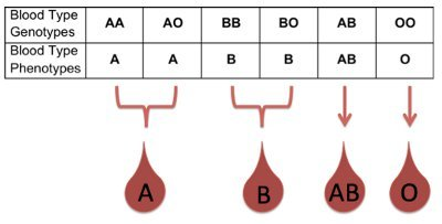 Illustration of Regarding The Genes Passed To Children From Parents Of Blood Types AB And B?