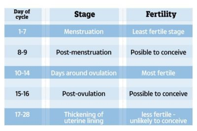 Illustration of The Possibility Of Getting Pregnant During Sex After Menstruation?