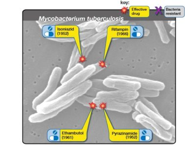 Illustration of Another Option For Anti Tuberculosis Drugs?