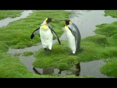 Illustration of Overcome The Way Of Walking Like A Penguin?