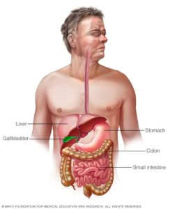 Illustration of The Stomach Feels Full Accompanied By Nausea And Heartburn?