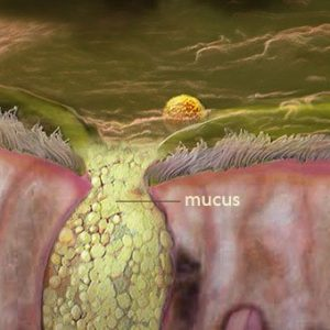 Illustration of Yellow Mucus Even If You Don't Cough?