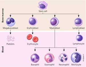 Illustration of How To Deal With High Leukocytes In Children Aged 5 Years?