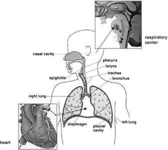 Illustration of Causes Of Shortness Of Breath In Patients With Leaky Kidneys?