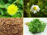 Is It True That Weight Gain Herbs Can Interfere With Fertility?