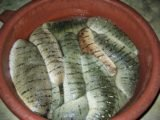 How To Manage Burns Using Sea Cucumber Gold?