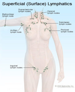 Illustration of Swelling Of The Lymph Vessels In The Groin?