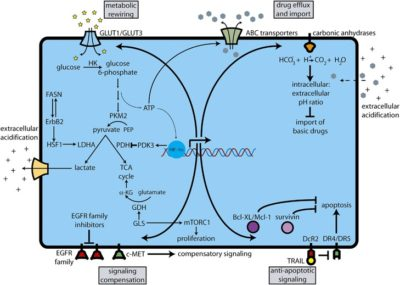 Illustration of Possible Natural Cell Metabolism Failure?