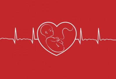 Illustration of The Fetus Is Not Visible And There Is No Heartbeat?