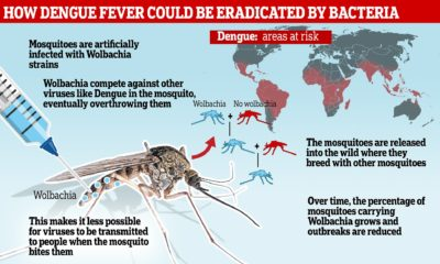 Illustration of Danger Of Dengue Fever That Is Not Given Treatment?
