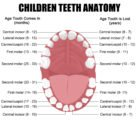 The New Upper Incisors Develop At The Age Of 19?