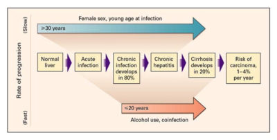 Illustration of The Possibility Of Hepatitis C Recovery Without Treatment?