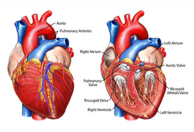 Illustration of The Effect Of Heart Disease With The Results Of Medical Check-ups?