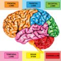 How To Treat Amnesia In Brain Cancer Sufferers?