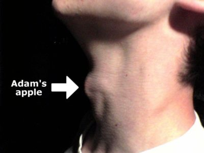 Illustration of Adam's Apple Did Not Appear When He Was 18 Years Old?