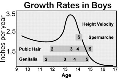 Illustration of Has My Height Growth Stopped?