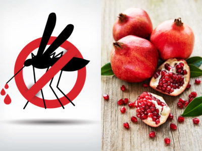 Illustration of Which Fruit Should Not Be Consumed By DHF Patients?