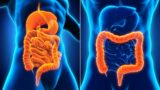 Differences In The Characteristics Of Stomach Disorders And Intestinal Diseases?