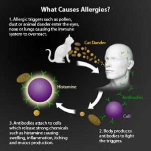 Illustration of Causes And Ways To Deal With Recurring Allergies?
