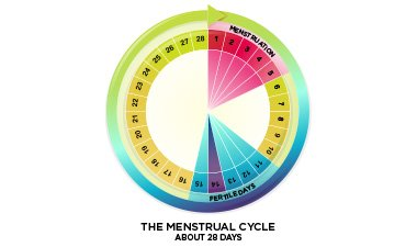 Illustration of Menstrual Cycle 28 Days. Is It Normal?