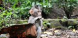 Possible Transmission Of Rabies Through Hands Exposed To Monkey Saliva?