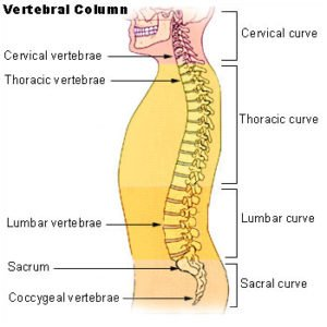 Illustration of Follow-up Examinations Of The Spine And Legs After The Accident?