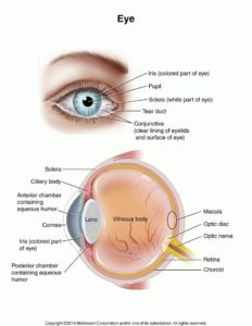 Illustration of What Is A Clear Lump On The White Of The Eye?