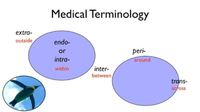Illustration of The Meaning Of The Word Medicine?